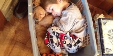 Adorable Baby Sleeps With Pups