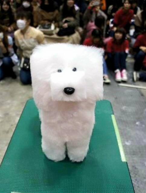 Japanese Cube Dog Show
